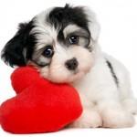 DOKAZANO: Psi imaju osećanja baš kao i ljudi!