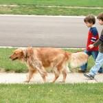 Ukoliko šetate sa svojim psom, možda pravite ovu grešku!
