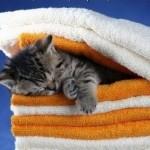 """DA LI ZNATE: Šta to znači """"okupati mačku na suvo""""?"""