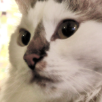 Zablude o mačkama