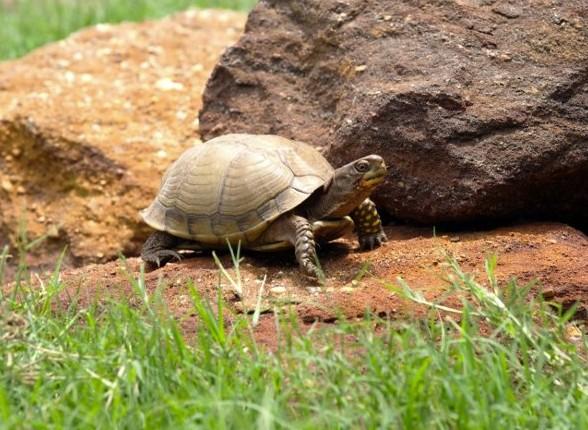 kornjaca nakon hibernacije