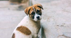 NE eutanaziji petface