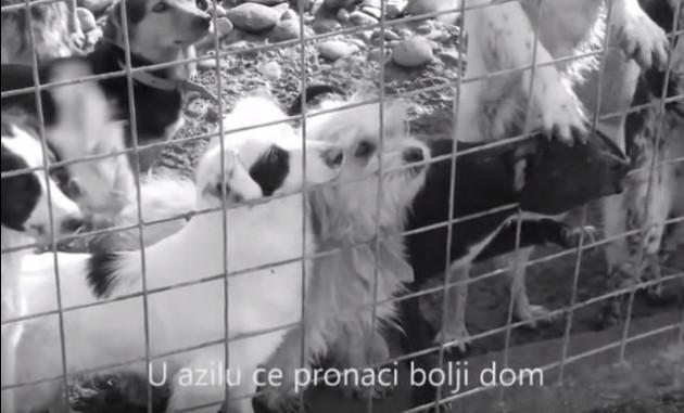 Ostavljeni na ulicama Srbije petafce