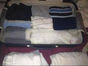 Macka u koferu