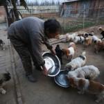 ŽENE OGROMNOG SRCA: Njih pet brine o 1.300 napuštenih pasa! (FOTO)