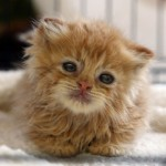 Napad na nedužne mačiće – ono što treba da znate!