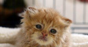 buve i macici petface