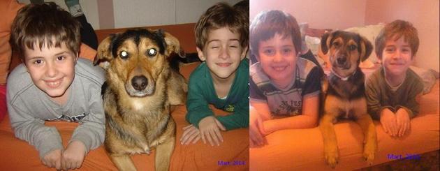 deca i kucni ljubimci