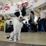 """SRAMOTA: """"Delta City"""" primio niz uvreda zbog odluke da danas zvanično postaje PRVI """"DOG FRIENDLY"""" šoping-mol u Srbiji!"""