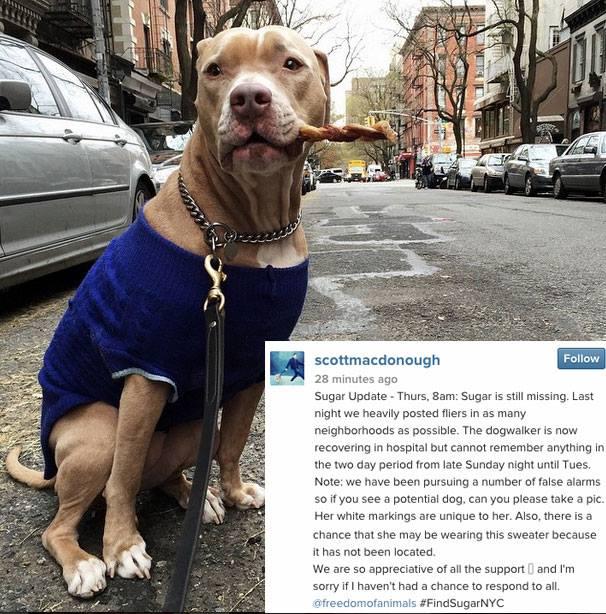 izgubljen pas petface5