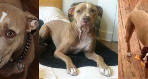 izgubljen pas petface