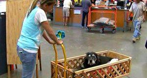 kolica za pse petface