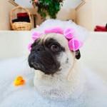 SRUŠITE PREDRASUDU: Ljubimca NE TREBA kupati!