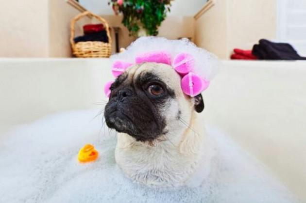 kupanje pasa petface