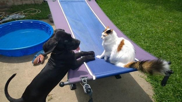 ljudi i psi petface