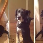 """Da li je ovo najslađi video ikada: Pas se nakon 10 dana vratio kućI, a maca mu se """"bacila u naručje""""!"""