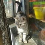 SREĆNI KRAJ DRAME U BEOGRADU: Maca zarobljena u krovu supermarketa – SPAŠENA!