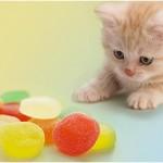 DA LI STE ZNALI: Mačke nemaju gen za slatko!