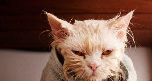 okupanih mačaka petface