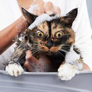 okupanih mačaka petfaceokupanih mačaka petface