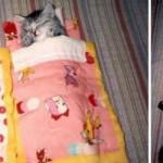 15 FOTOGRAFIJA PRE I POSLE: Mačke koje se ne mire da su jednostavno odrasle!