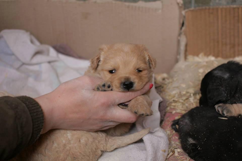 ONI TREBAJU HITNU NAŠU POMOĆ: Mama pas izbačena na ulicu sa 4 bebe u Zaječaru!