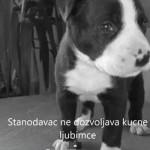 NAJEMOTIVNIJI VIDEO KOJI ĆETE VIDETI: Oni su ostavljeni na ulicama Srbije, a njihovi vlasnici koriste ove izgovore,…