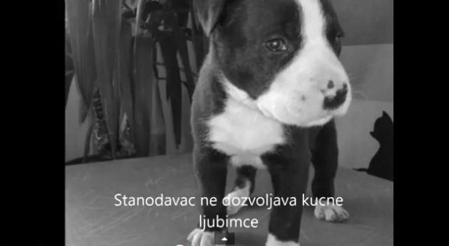 Ostavljeni na ulicama Srbije petface