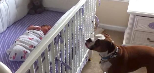 pas i beba petface