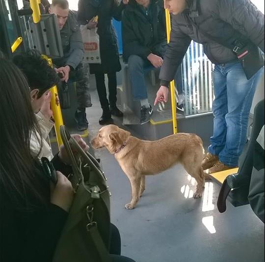 pas iz autobusa petface