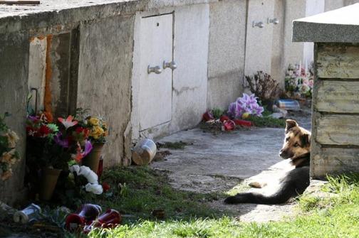 pas na groblju petface