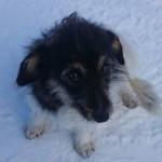 HITNO, HITNO: Ukoliko mu ne pronađemo privremen smeštaj do sutra, ovaj pas ostaje SAM da tuguje na Kopaoniku!