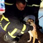 HEROJI: Psi lavežom probudili porodicu i spasili ih iz kuće u kojoj je izbio požar!