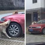 OSVETA: Udruženi psi uništili automobil čiji je vlasnik udario njihovog prijatelja!
