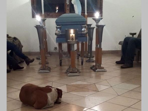 psi na sahrani petface