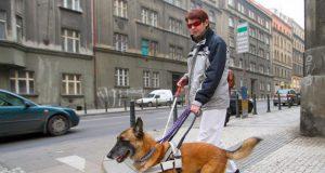 psi vodici slepih petface
