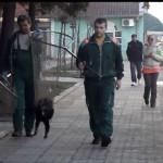 """SVILAJNAC: HITNA PETICIJA: """"Zaustavite šintere da hvataju i ubijaju pse""""! (VIDEO)"""