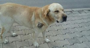 spasili psa petface