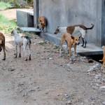 ISKORISTITE PRILIKU: Besplatna sterilizacija u Nišu!