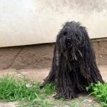 VELIKO HVALA: Bolhaš, pas koji je ujedinio Srbiju, spašen je i na sigurnom je!