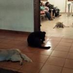 SUZE SAME KREĆU: Napušteni psi odaju počast ŽENI VELIKOG SRCA!