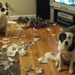Ovi psi su UHVAĆENI NA DELU! (FOTO) :D