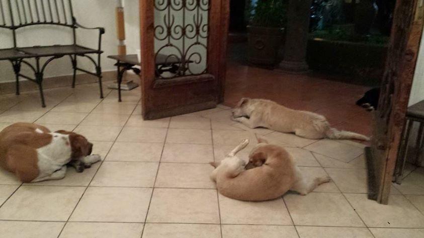 psi na sahrani