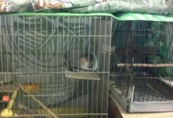 krevetac za papagaja