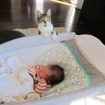 URNEBESNO: Reakcija mace kada je saznala da je u njihov dom stigla beba! FOTO