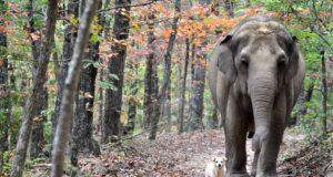 Slon Tara petface
