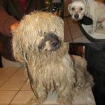 BEOGRAD: Zapostavljeni pas Badi danas izgled OVAKO! (FOTO)