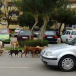 """KO JE ODGOVORAN ZA OVO: U Baru """"izbačen"""" čopor napuštenih pasa?!"""