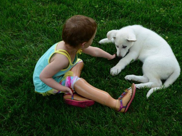 devojcica i pas bez noge petface