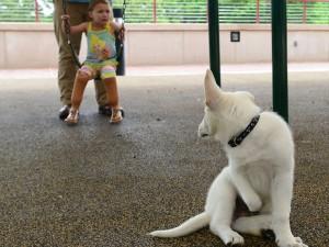 devojcica i pas bez noge petface3